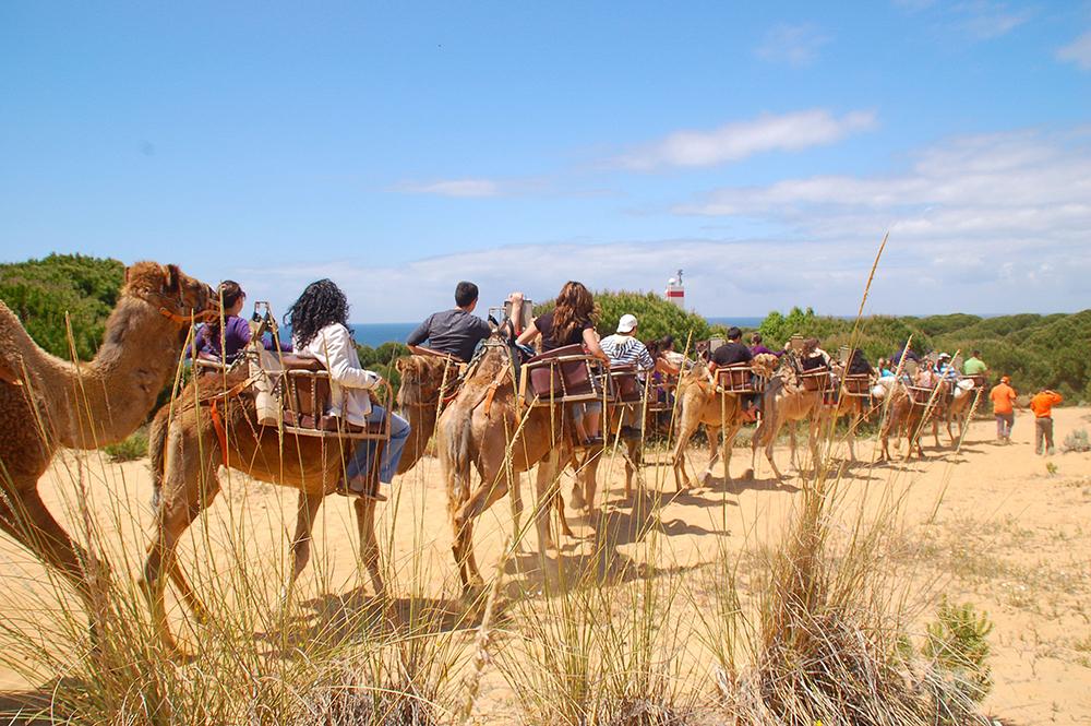 Actividades de turismo activo para hacer con tu peludo: paseos en camello por Doñana