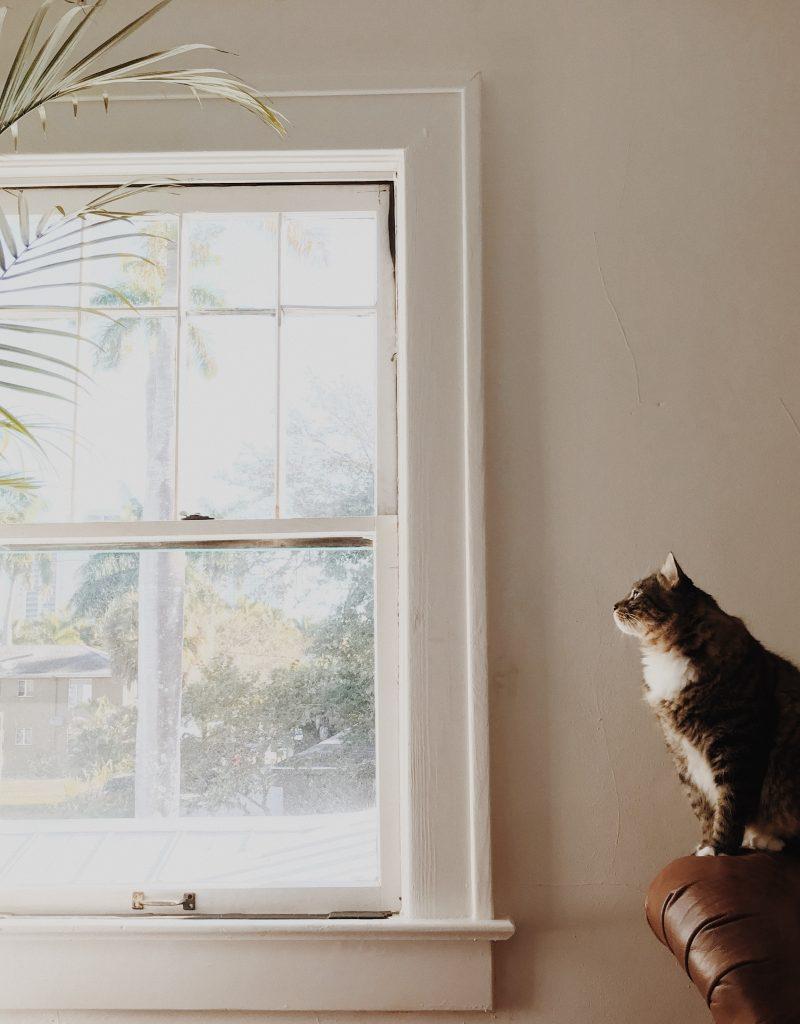 Animales de compañía en una vivienda particular