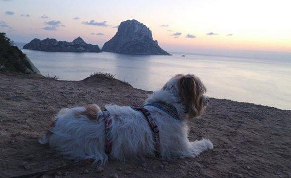 Viajando con mi mascota: Lucca La Locca, en las islas Baleares