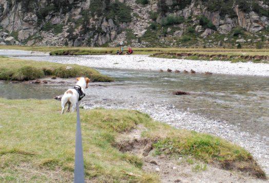 Viajando con mi mascota: De senderismo por el Pirineo, con Sit and Plas