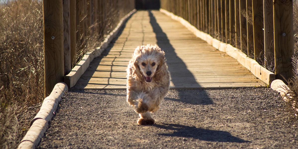 Llévate a tu perro de vacaciones ¡gracias a Pets.Travel!