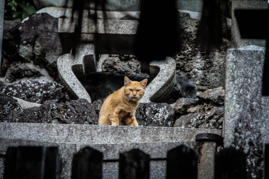 Las colonias de gatos, incluidas en la normativa de mascotas de Las Palmas de Gran Canaria.
