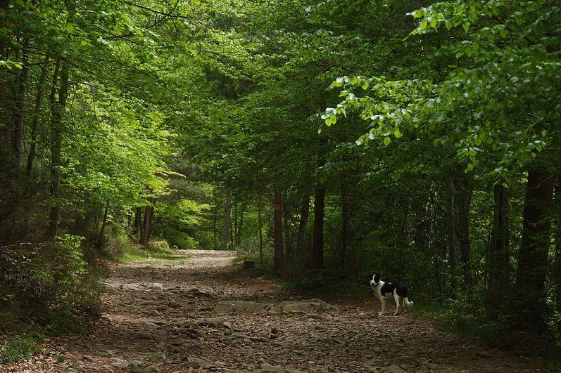 Los Cameros y el Parque Natural de Sierra Cebollera cuentan con numerosas rutas de senderismo