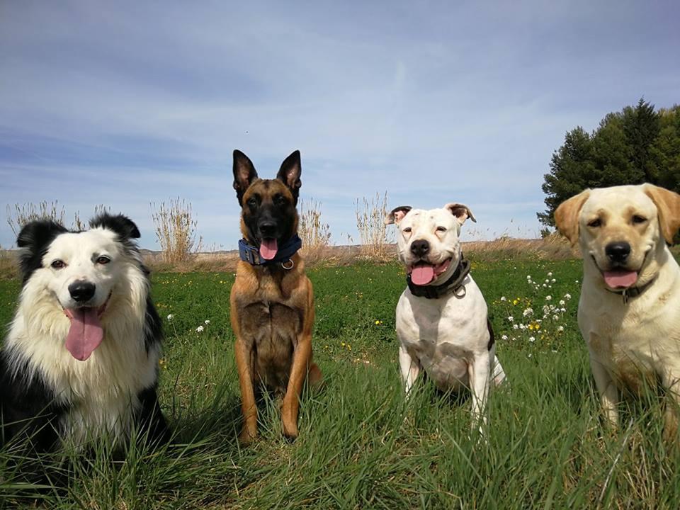 Los cuatro perros de Pedro Leal, incluyendo a Golfo (tercero por la izda)