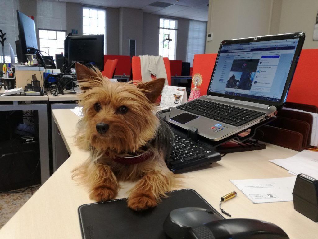 NIka, en la oficina de Pets Travel