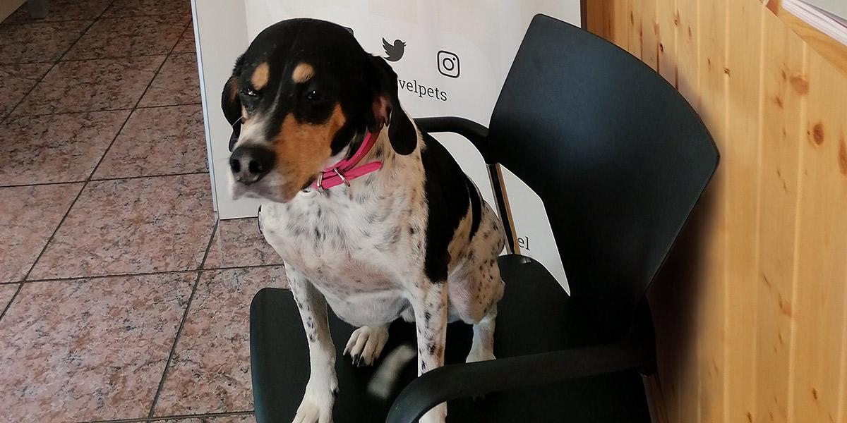 Día mundial de llevar el perro al trabajo