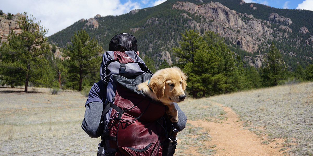 Viajar con tu mascota no tiene por qué ser más caro. Foto: Spencer Gurley