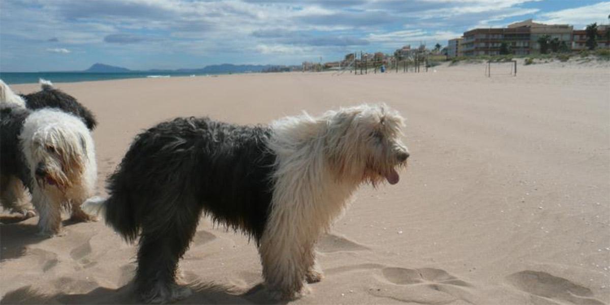 Perros en una playa de Valencia. Foto: Camping San Vicente