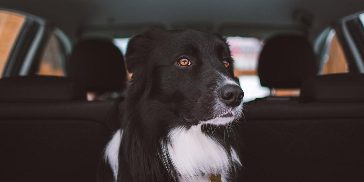Accesorios de seguridad para perros en el coche