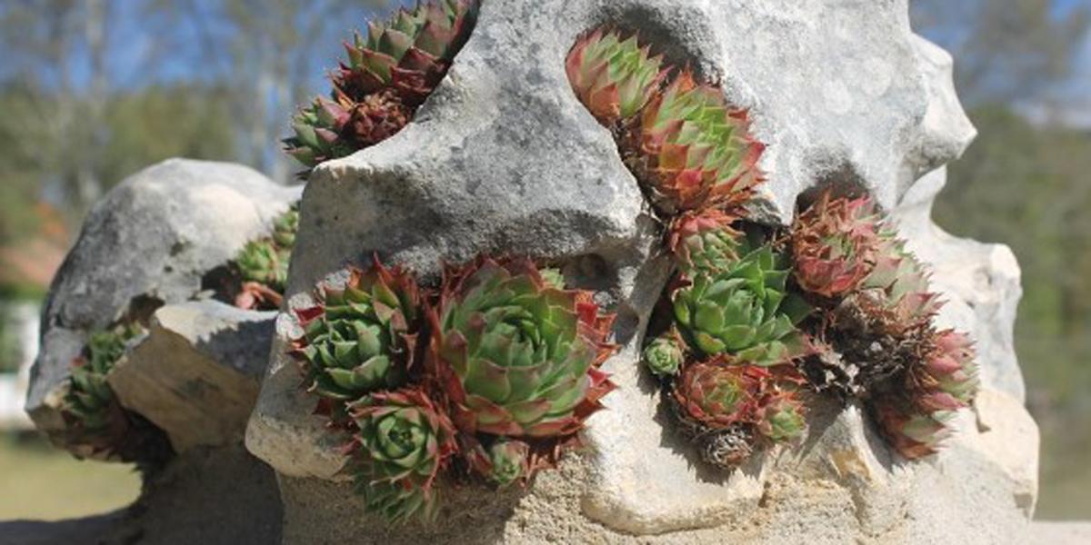 Flora y naturaleza en la Sierra de Gúdar