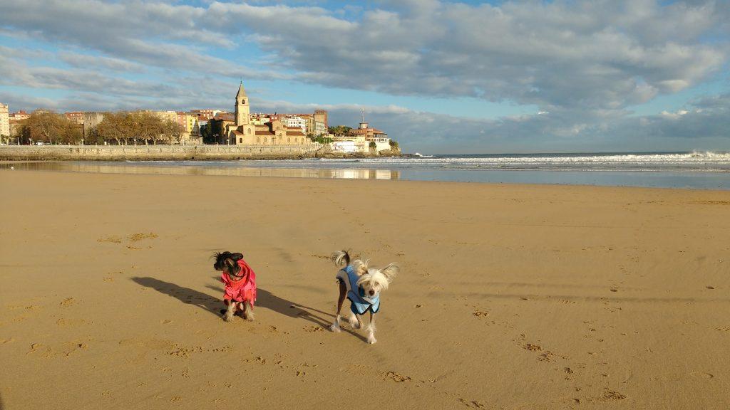 Las playas petfriendly de Gijón, una opción ideal para tu peludo