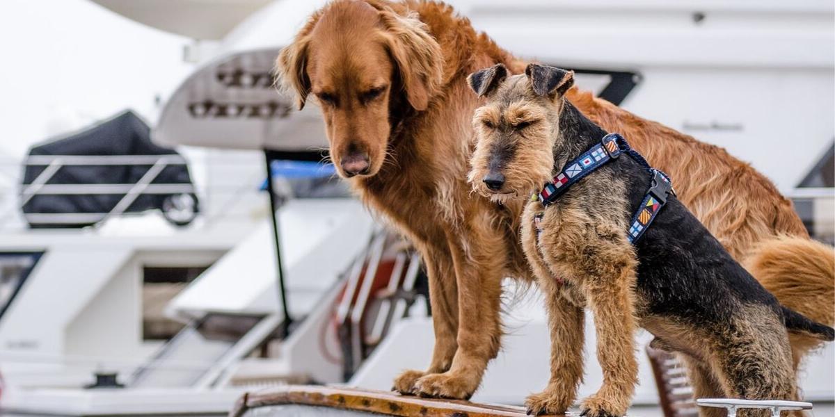 Consejos para viajar con tu perro en barco