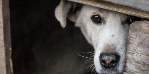 Los fuegos artificiales y los petardos pueden causar ansiedad a tu perro