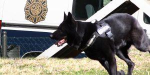 Uno de los perros de la asociación Héroes de 4 Patas