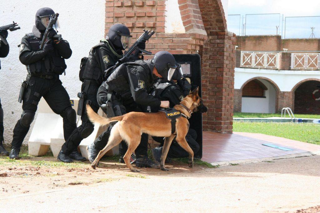 Los perros y los policías trabajan y entrenan juntos