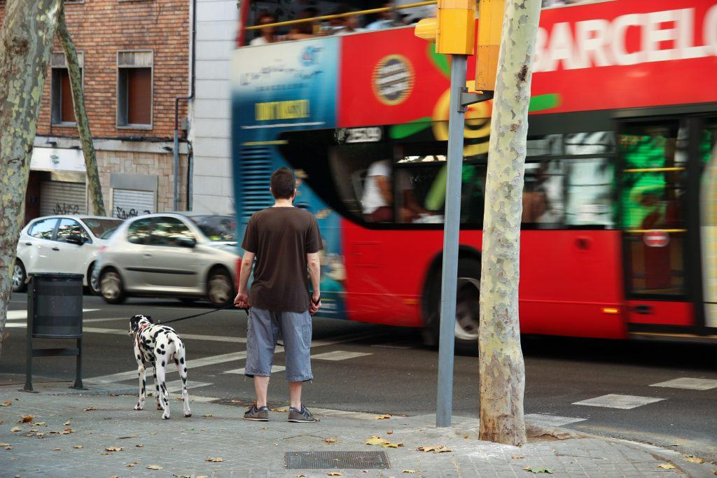 Tráfico, ruidos... elementos que pueden provocar estrés canino