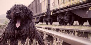 Viajar con tu perro en tren, en España y en Europa