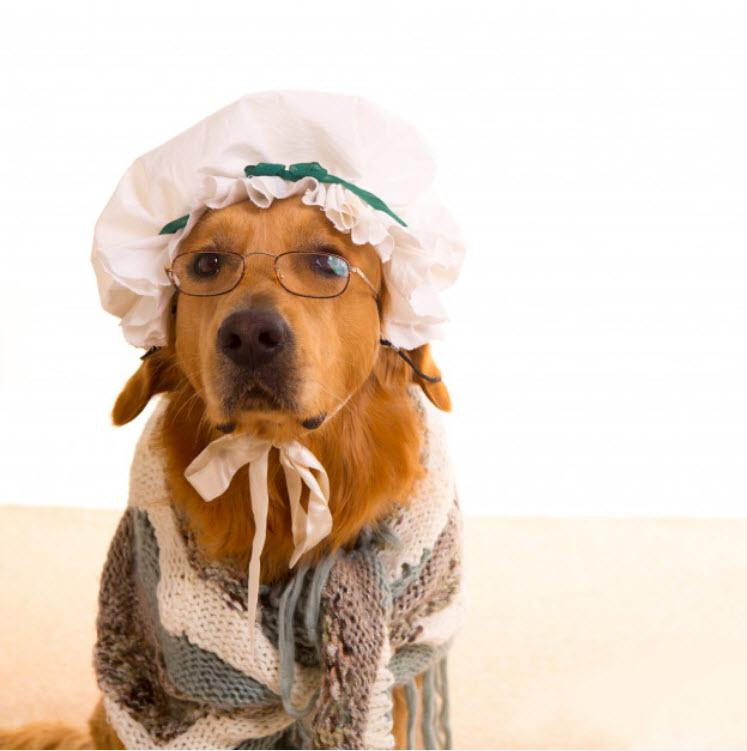 Disfraces especial Guaulloween: perro disfrazado de abuela