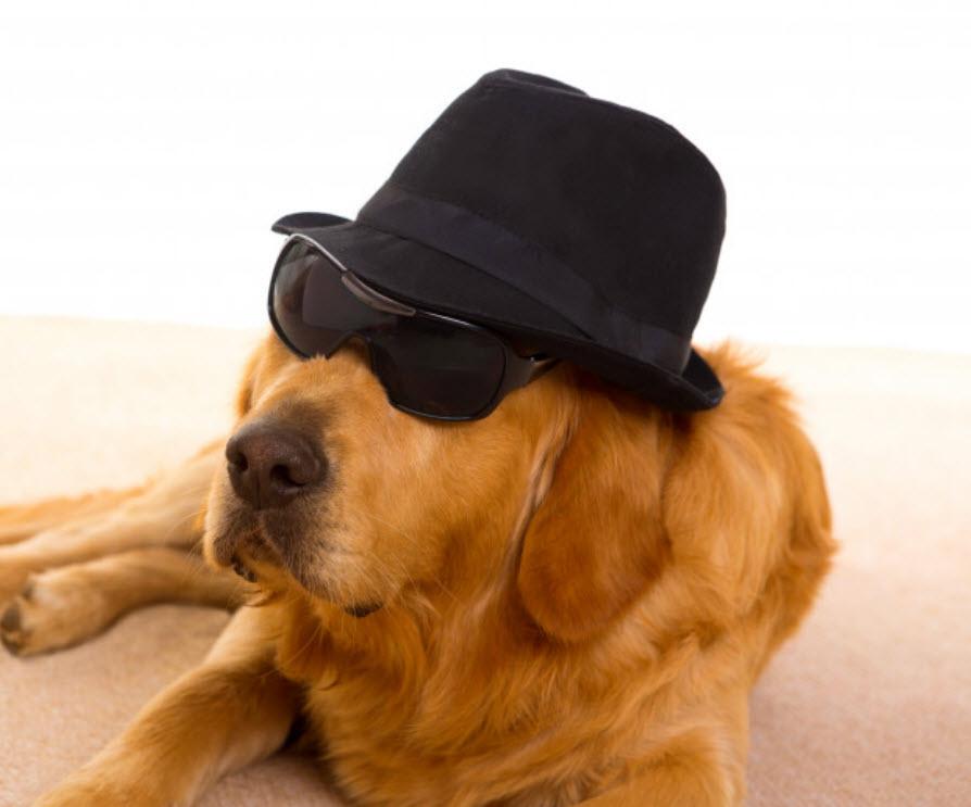 Disfraces especial Guaulloween: perro detective