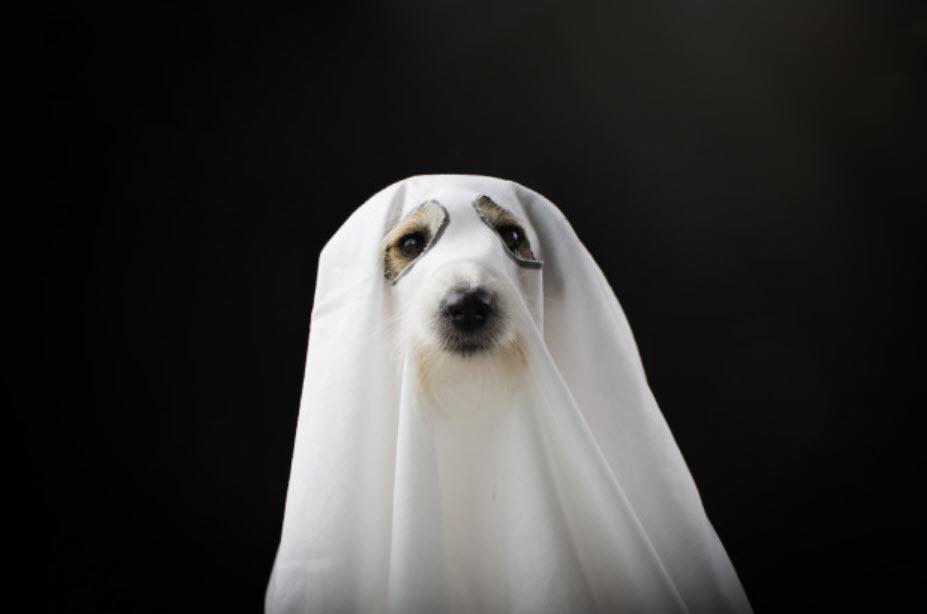 Disfraces especial Guaulloween: perro fantasma
