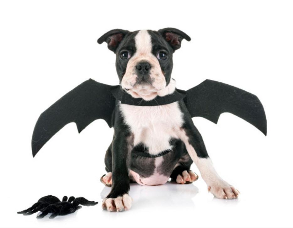 Disfraces especial Guaulloween: perro murciélago