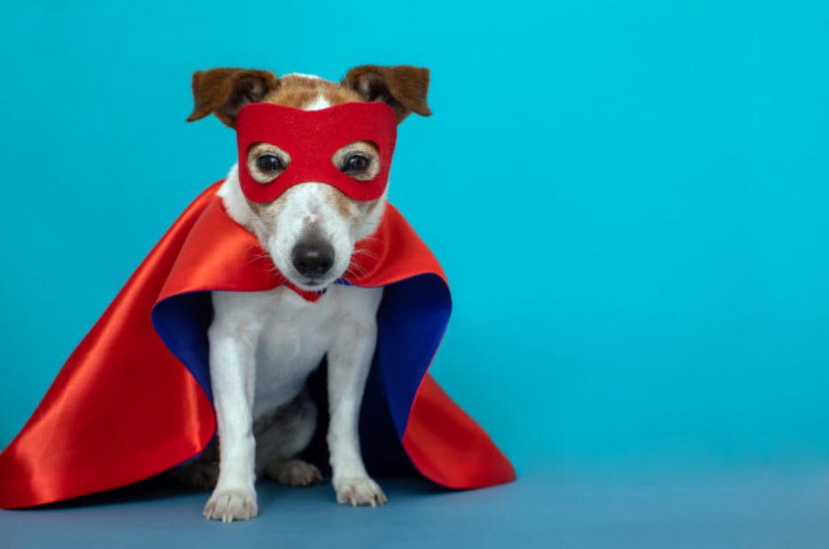 Disfraces especial Guaulloween: perro superhéroe