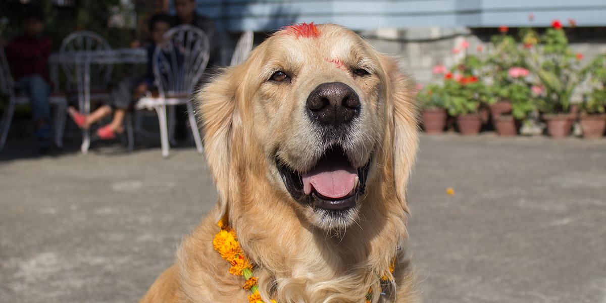Meko, en la India, durante su viaje de España a Tailandia en coche
