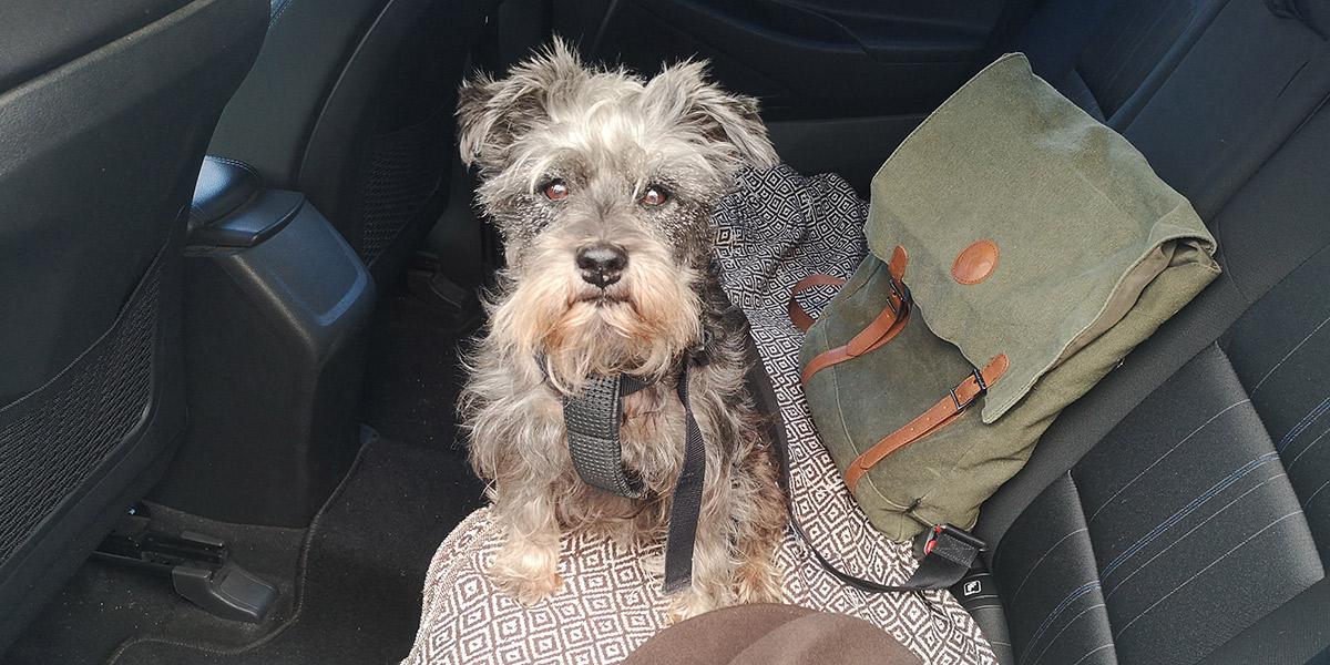Consejos para viajar con nuestro perro en coche