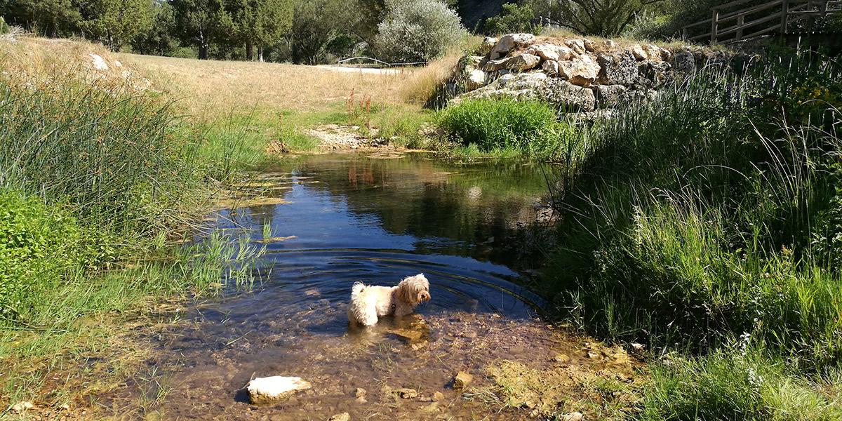 Uma Dog, en la Ruta del Cañón de Río Lobos