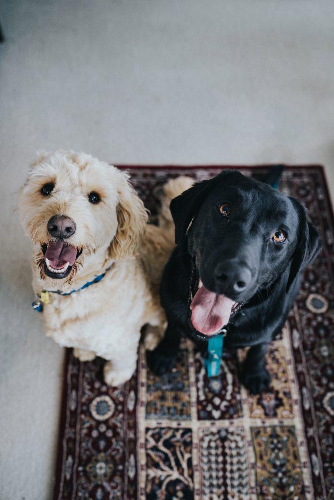 El número de perros o que se queden solos en la habitación, dos de los factores que a veces limitan los establecimientos