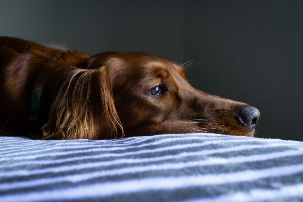 Lo ideal es que nuestro perro se quede relajado en la habitación