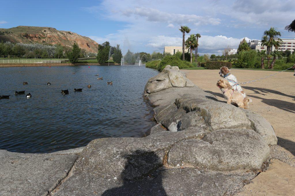 El paseo por la ribera del Ebro, ideal para conocerlo con nuestro perro