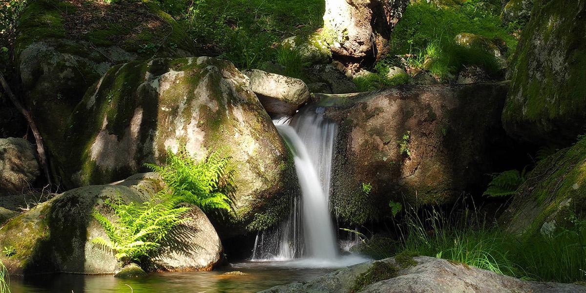 Ruta por los Bosques Mágicos del Valle del Iruelas. Foto: Diputación de Ávila