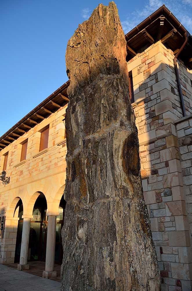 Árboles fosilizados en Hacinas, en la provincia de Burgos. Foto: Sierra de la Demanda