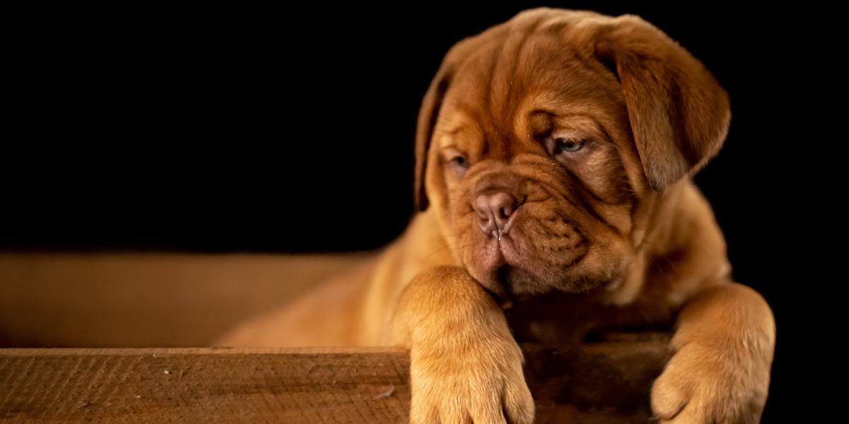Si damos positivo, ¿cómo afecta a nuestro perro?