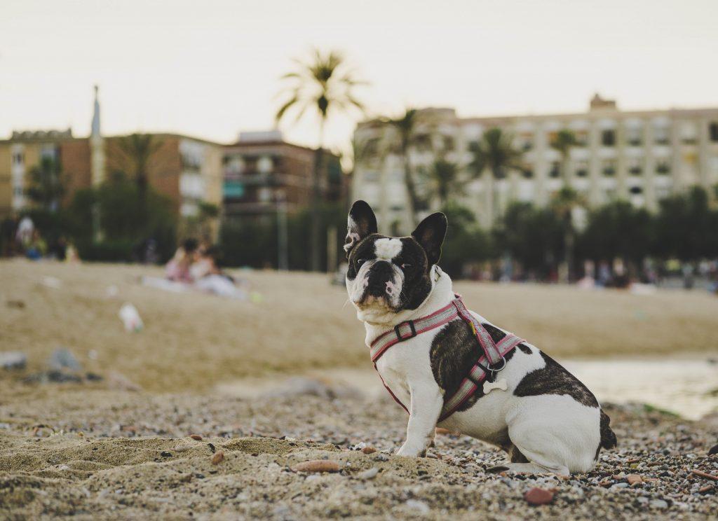 En Barcelona también hay playas para disfrutar a cuatro patas