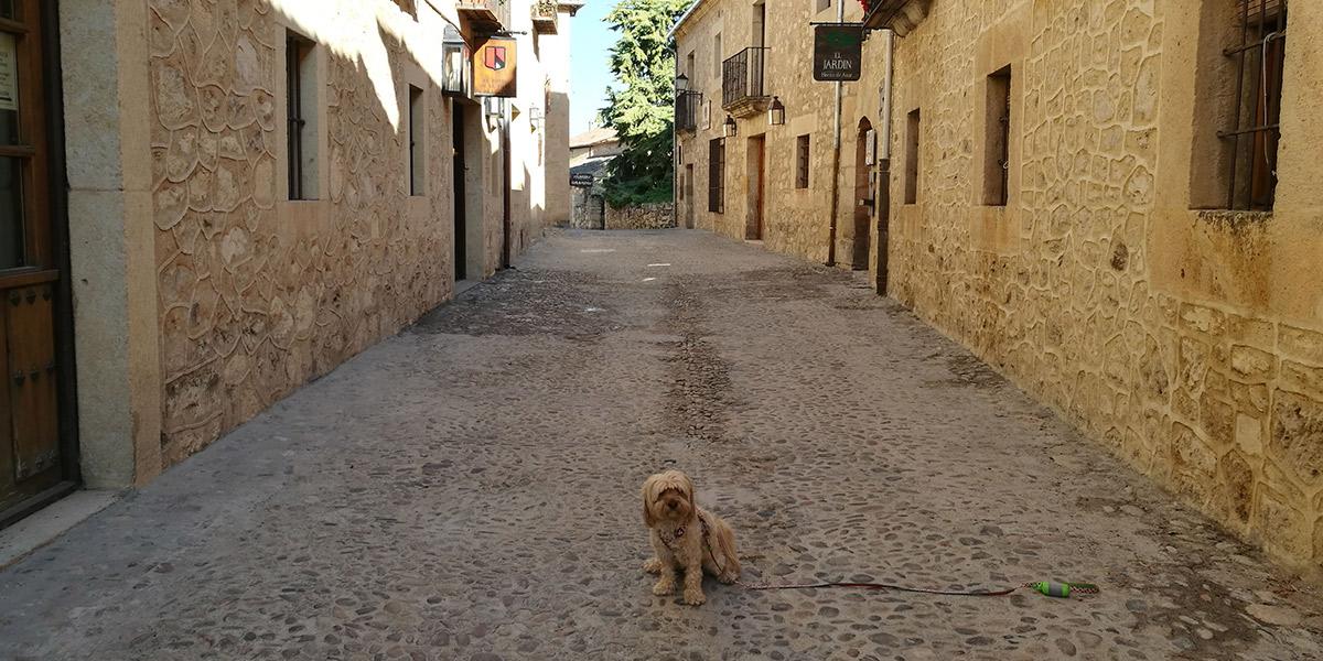 Uma, en una calle de Pedraza