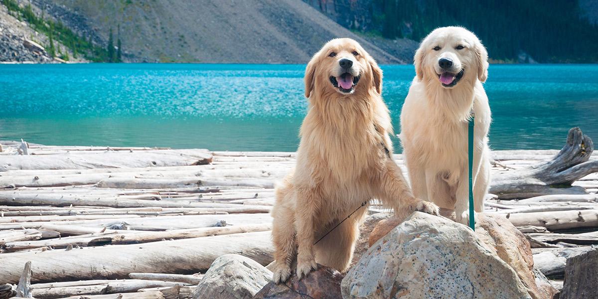 Los viajeros con mascota siguen aumentando