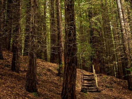 Bosque de Sequoyas de Cabezón de la Sal. Foto: Turismo de Cantabria