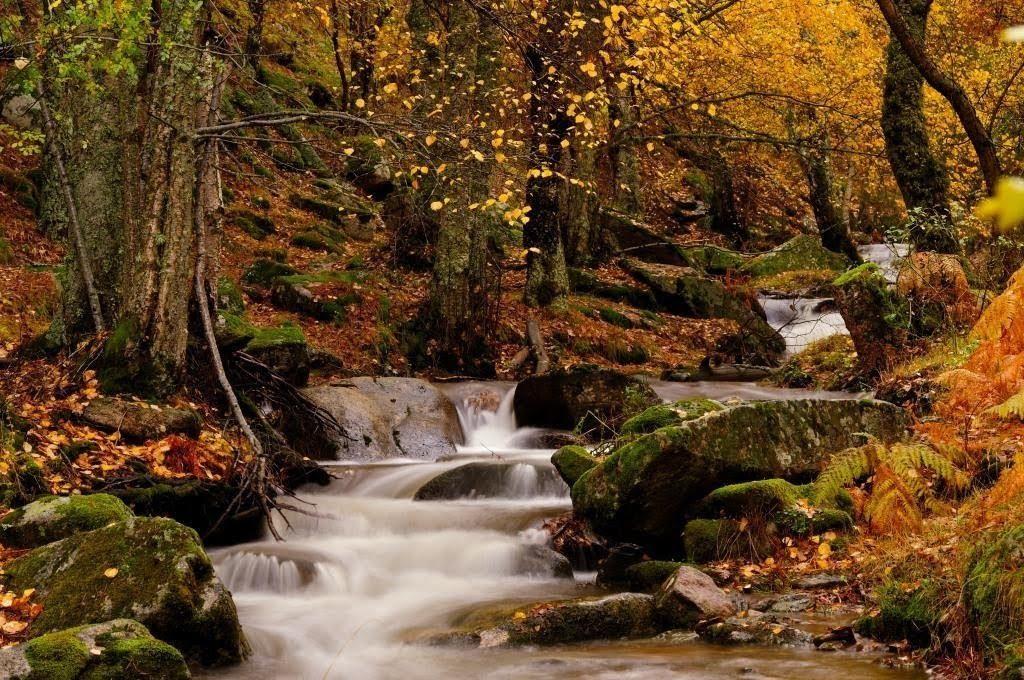 Bosque privado de La Bárcena Apartamentos Rurales y Spa