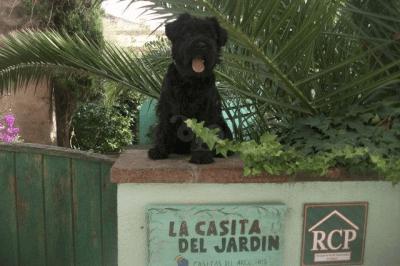 Casas Rurales Que Admiten Perros En Cataluña Pets Travel