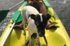 Humano y perro