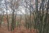 Bosque en el entorno de la casa