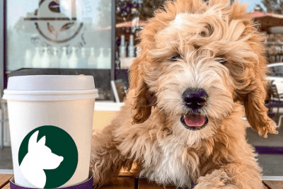 The Doger Cafe